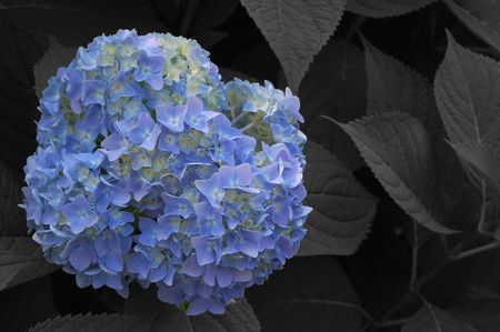 Blue flower that stands