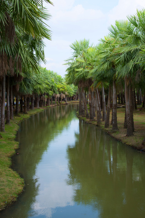west river: Palm garden and canal Stock Photo