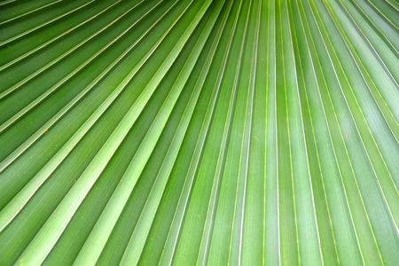 greenery background close up palm leaf