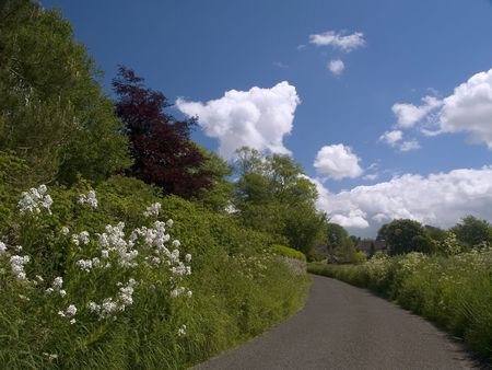 grass verge: Paese corsia su una giornata di sole. Archivio Fotografico