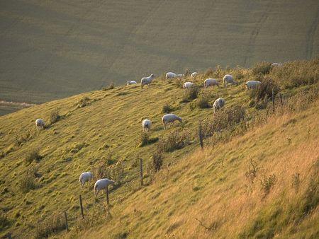 hillside: Sheep on an English country hillside Stock Photo