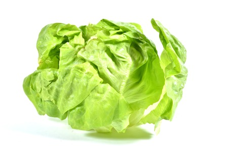 Isolated Boston Lettuce, slight shadow