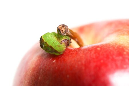 Curled up caterpillar isolated on a white background on an apple. 스톡 콘텐츠
