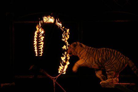 animales de circo: le�n,  Foto de archivo