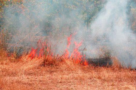pyromaniac: fire,