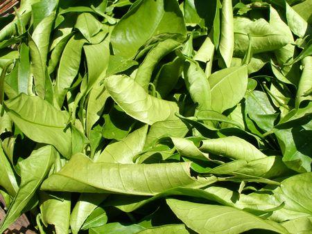 macerated: herb tea Stock Photo