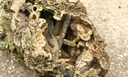 fossilized: fossilized stone,,