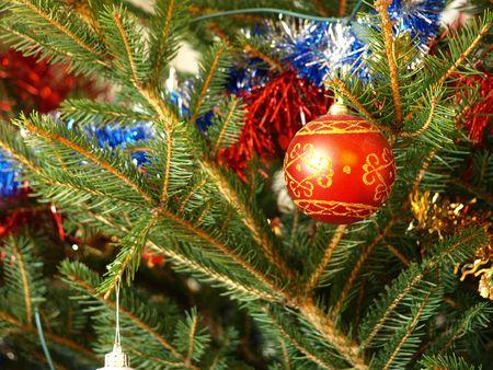 swell: Christmas swell on the fir    Stock Photo