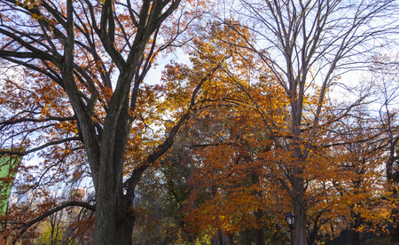 Autumn in New York City Central Park