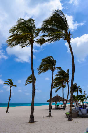 Breathtaking view of the romantic Bucuti & Tara Resort off of Eagle Beach on the Eastern side of Aruba with palm trees, white beach umbrellas, a few clouds on a sunny day