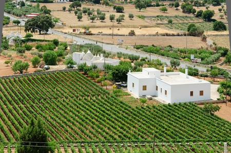 puglia: South italian mediterrean country with grapevine and white houses.