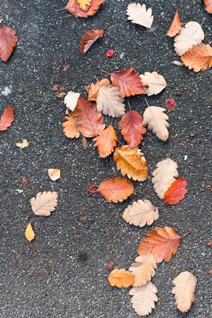Brown, red and yellow leaves on a road asphalt. photo