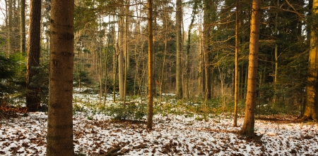 Woods at dusk in winter  photo