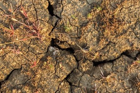 Cracked dry soil Standard-Bild