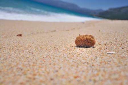 molluscs: seaweed on the beach