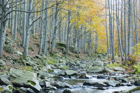 Stream in beech forest in autumn, National Park, Italy