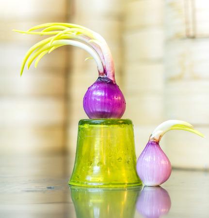spanish onion: incoming season spanish onion spring Stock Photo