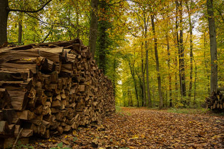 Stacked firewood along a path in the autumn forest