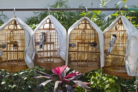 Row of cages with birds for sale