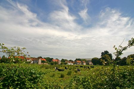 English country village green field and cows Stock Photo