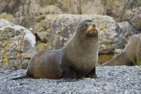 Seal with a concerned look on its face Stock Photo