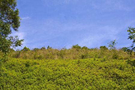 Green bushes with bright blue sky room for copy