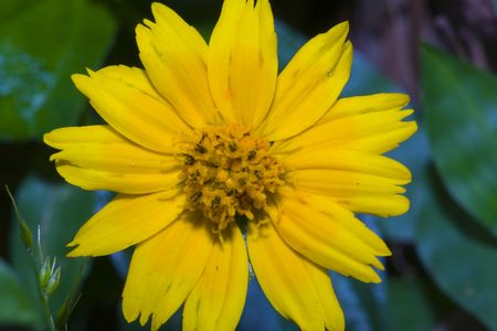 Close up of bright yellow flower