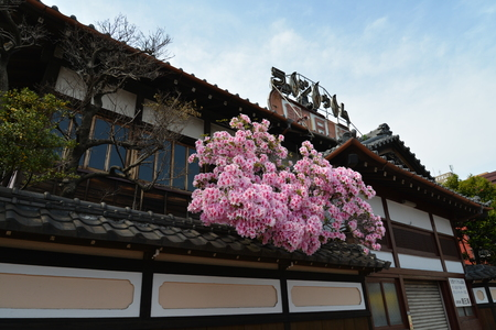 bath: public bath house in japan