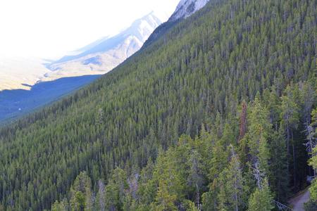 sulphur: Sulphur Mountain