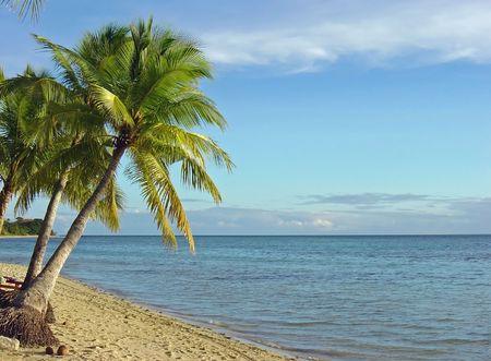 Fijian Beach and Palm Trees, Malolo Island, Fiji              photo