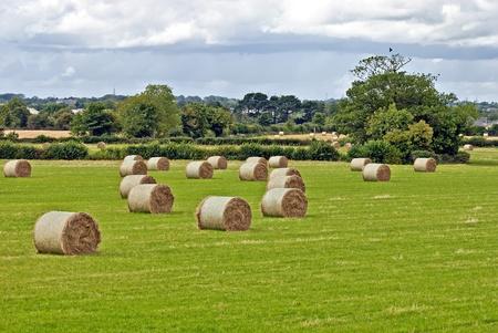 cultivo de trigo: fardos de paja en el campo irlandés