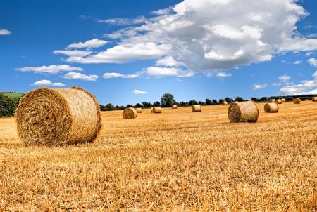 cultivo de trigo: fardos de paja en la campiña irlandesa Foto de archivo