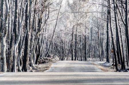 scorched: Road through scorched earth and forests, left behind by tragic wildfires in Catalonia, in the municipality of Llers  Stock Photo