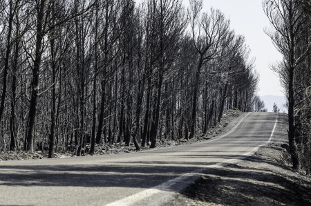 left behind: Road through scorched earth and forests, left behind by tragic wildfires in Catalonia, in the municipality of Biure, Spain