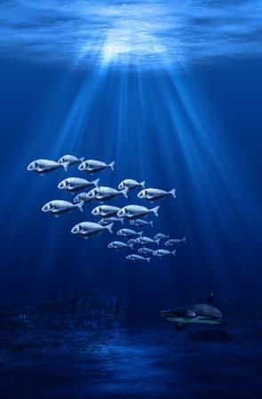 swarm: swarm and shark underwater scene