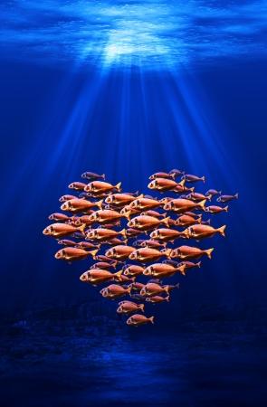 heart under: fish swarm forming a heart underwater scene