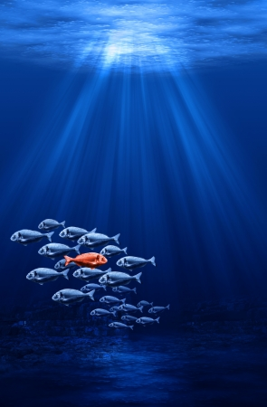 individualism: fish swarm - individualism in the mass concept