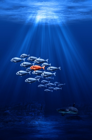 swarm: fish swarm - individual protected by the mass concept Stock Photo