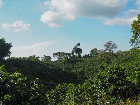 Overlooking a coffee plantation in Qundio, Colombia