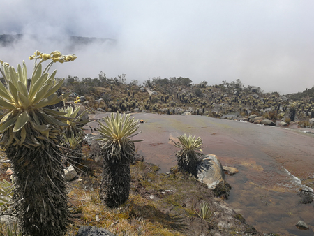 Páramo with frailejónes in the Sierra Nevada del Cocuy, Colombia 免版税图像