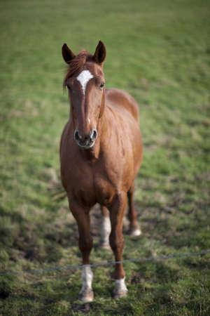 horsing around: Horsing around