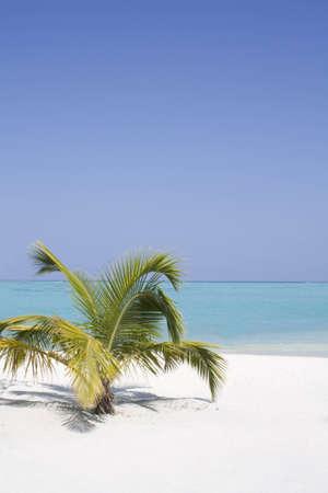 Palm Tree on a white beach Stock Photo