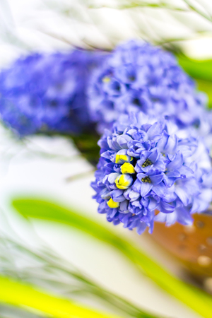 Bouquet of purple hyacinths in a copper bowl against white background. Stock Photo