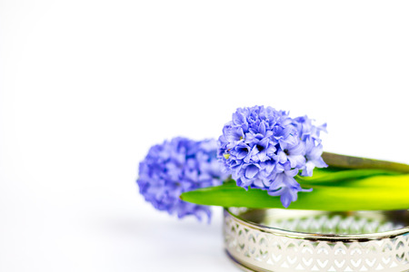 Purple hyacinths on a silver tray in front of white background.