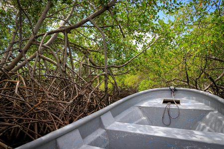 By boat through the mangrove forest. Cayo Arena, Punta Rucia, Dominican Republic