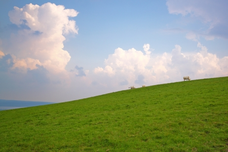 Cows grazing on a slope, under a cloudy sky photo