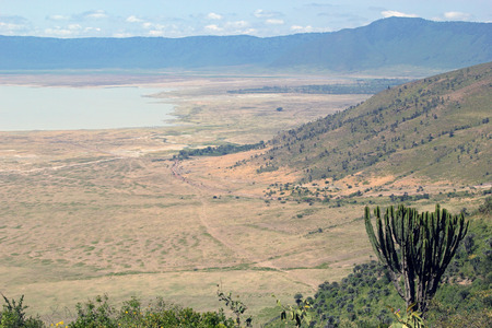 Panoramic view of Ngorongoro Conservation Area, Tanzania, with a giant candelabra plant, Euphorbia candelabrum, in foreground.