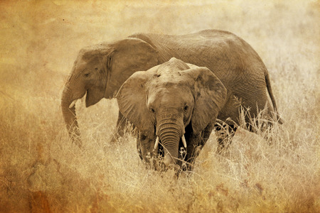 loxodonta africana: Two african elephants, Loxodonta Africana, in Serengeti National Park, Tanzania. Sepia tone vintage image with grunge effect. Stock Photo