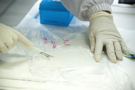biomedical: A scientist is cutting an agarose gel film in a biomedical laboratory