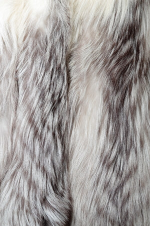 White fox coat used as fur texture or natural background